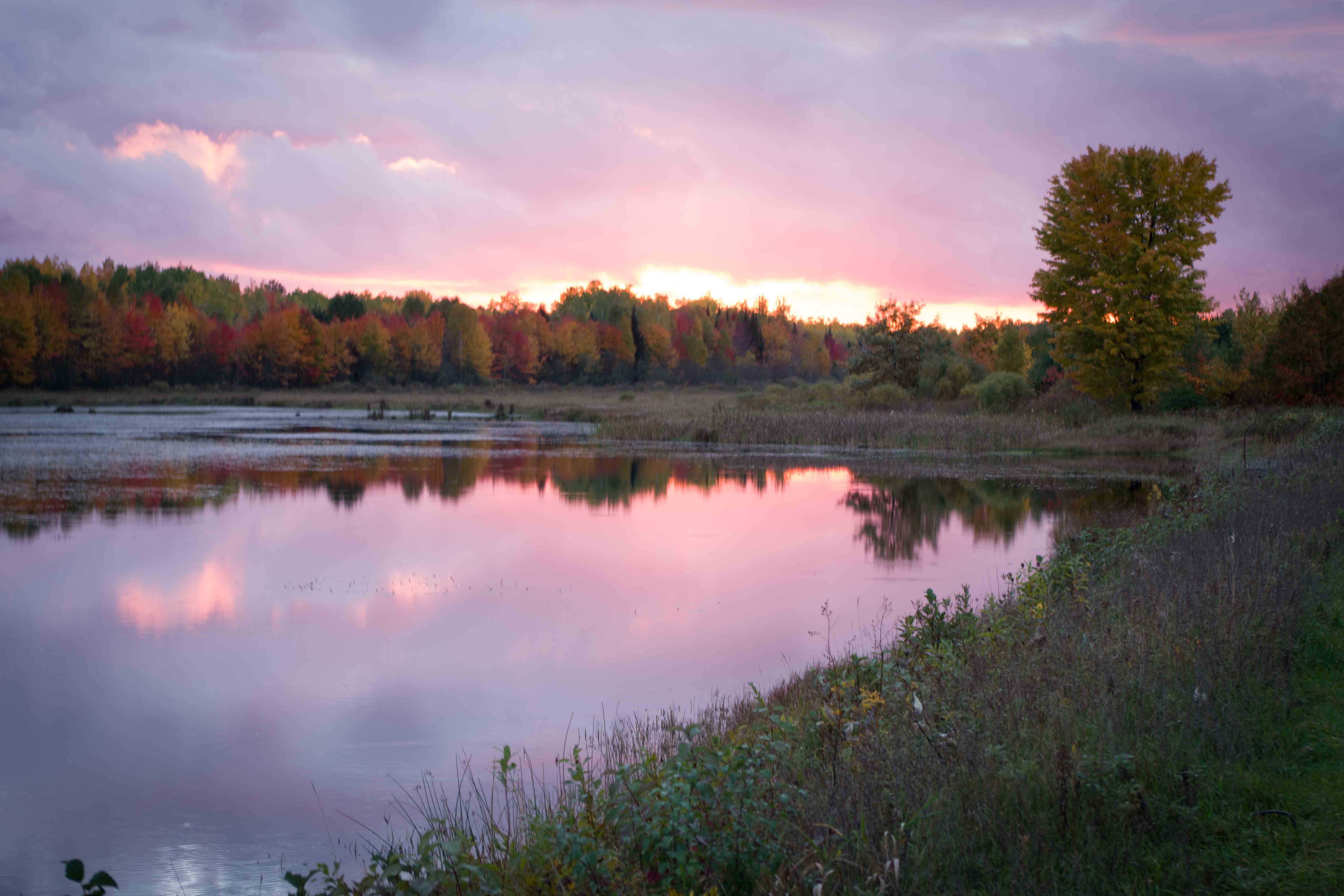 Dingmans Marsh Small.jpg