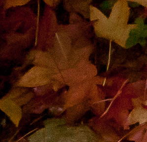 autumn_leaves_cloudy_fall_day_7286-3.jpg