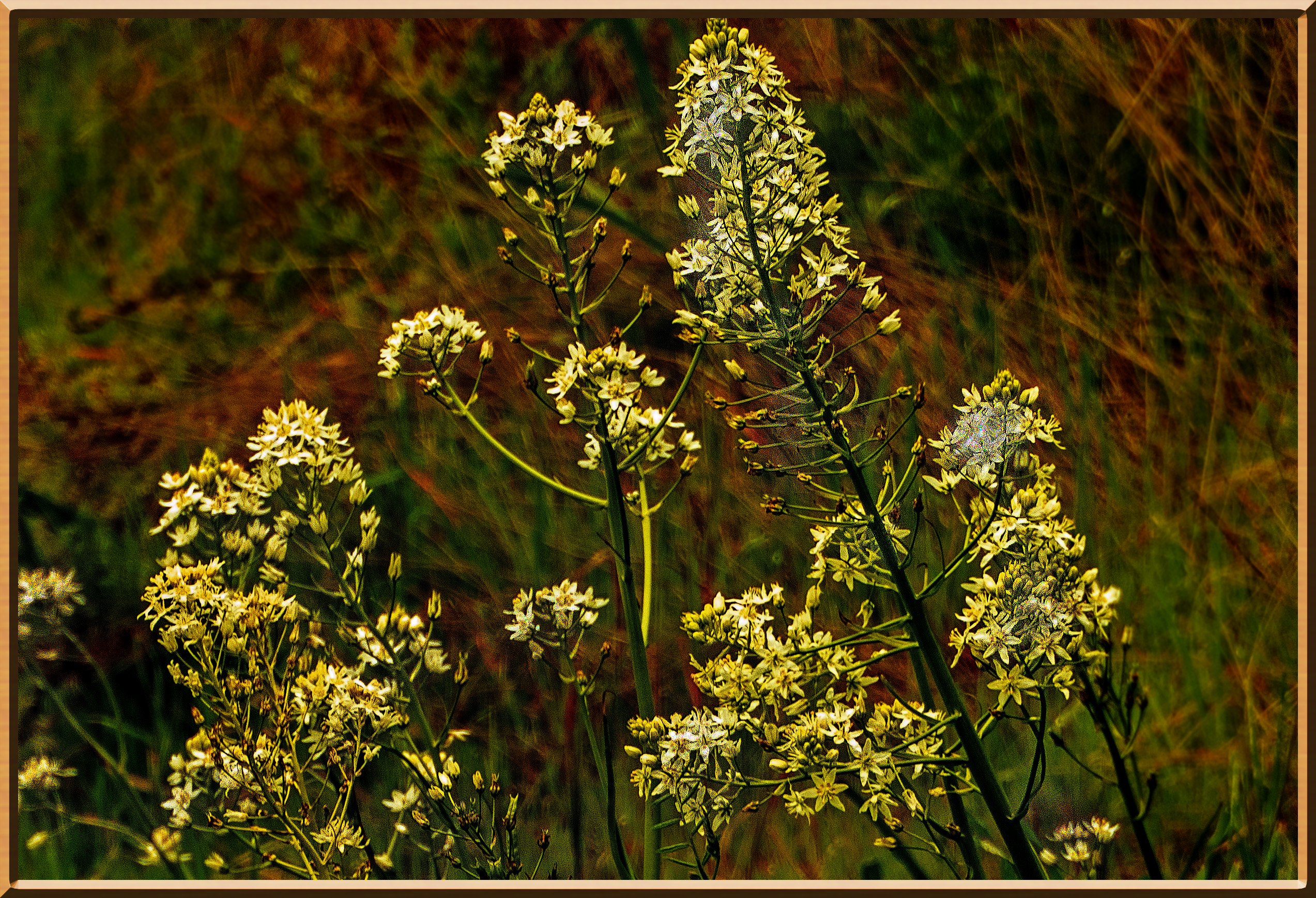 White+wildflowers_P1140801_2.jpg