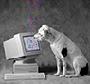 thedigitaldog