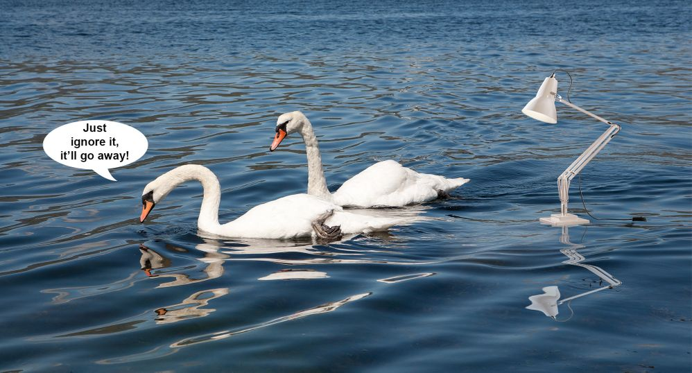 SFTW95Lamp-and-Swans.jpg