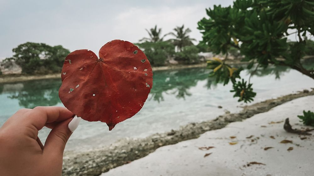 maldives_leaf.jpg