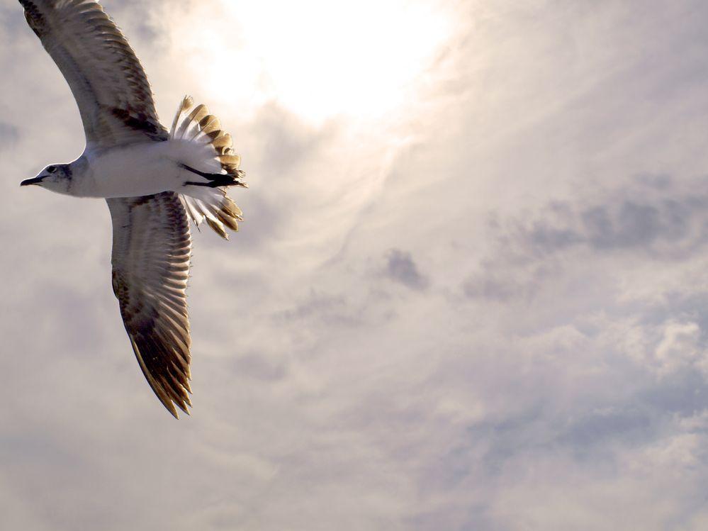 Soaring Seagull_Warm Filter.jpg