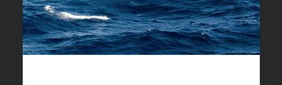 Screen Shot 2020-07-15 at 4.08.27 PM.png