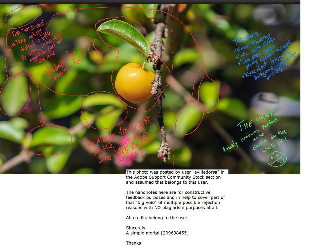 avilledorsa--Yellow_acerola_cherry_centered_in_image.jpg