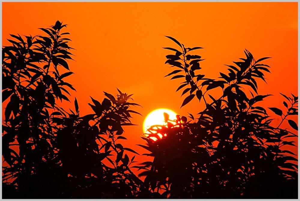 Scenic Sun through the tree