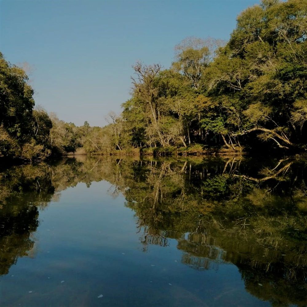 Arroyo tropical.jpg