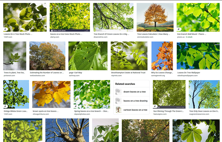Source:  Google Images (leaves on a tree)