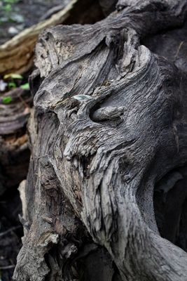 Title: Old Tree Roots