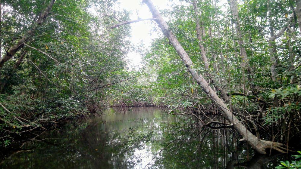 South south Nigeria creeks