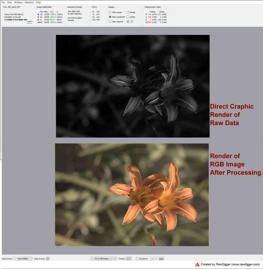 IMG_6833-20200920-160602-RawDigger-ScreenShot.jpg