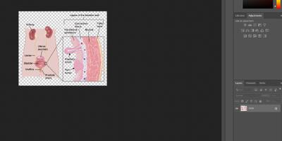 Screen Shot 2020-10-08 at 9.42.38 AM.png