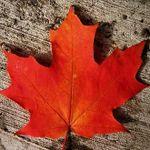 Canada_67