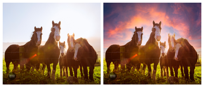 panoramic-ireland-sky-horses-before-after-collage.png