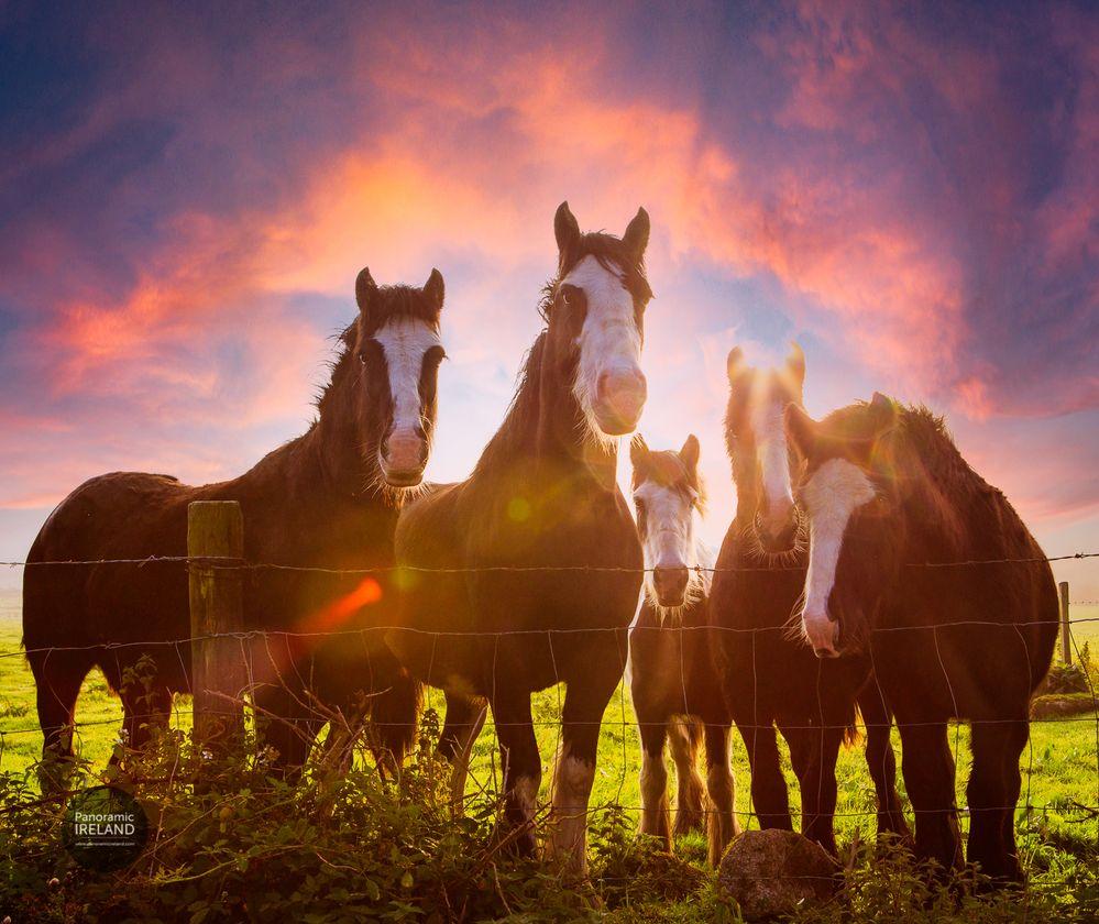 panoramic-ireland-4779-sky-horses.jpg