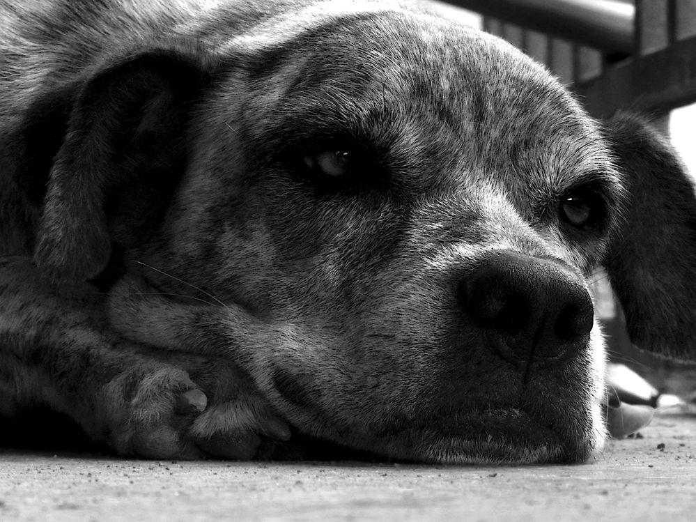 soft focus on dog.JPG