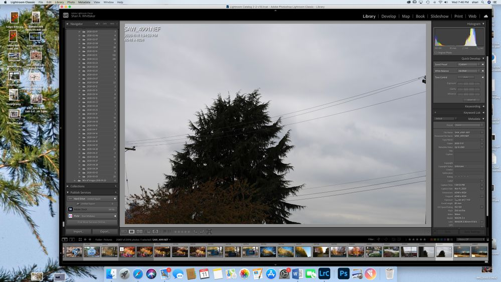 Screen Shot 2020-11-11 at 7.46.46 PM.jpg