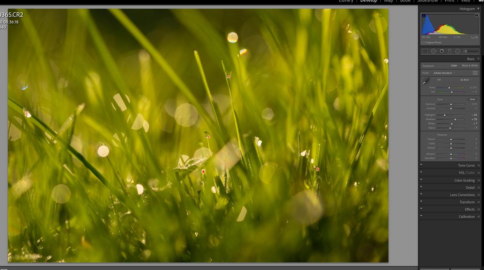 Screenshot 2020-11-15 at 21.07.24.png