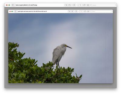 halo on bird in tree.jpg