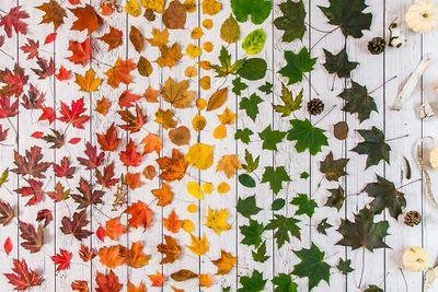 Fall rainbow.JPG