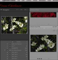 Screen Shot 2020-11-20 at 7.51.03 AM.png