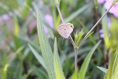 Butterfly Perching on Leaf.JPG
