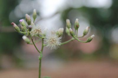 Tiny Detailed Flower.JPG