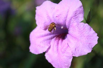 Flying Bees On Flower.JPG
