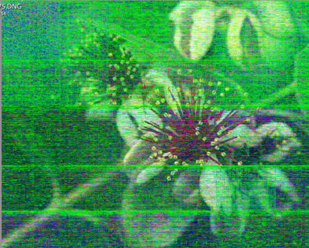 Screen Shot 2021-01-01 at 12.00.10 PM.png