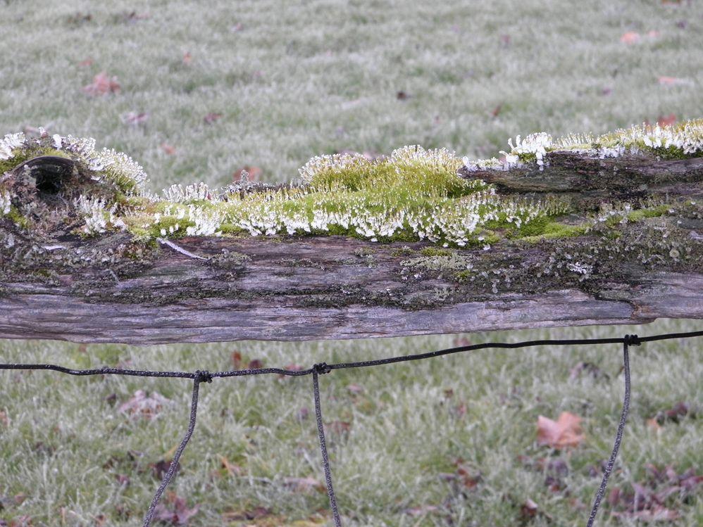 cold log moss frost series 1.jpg