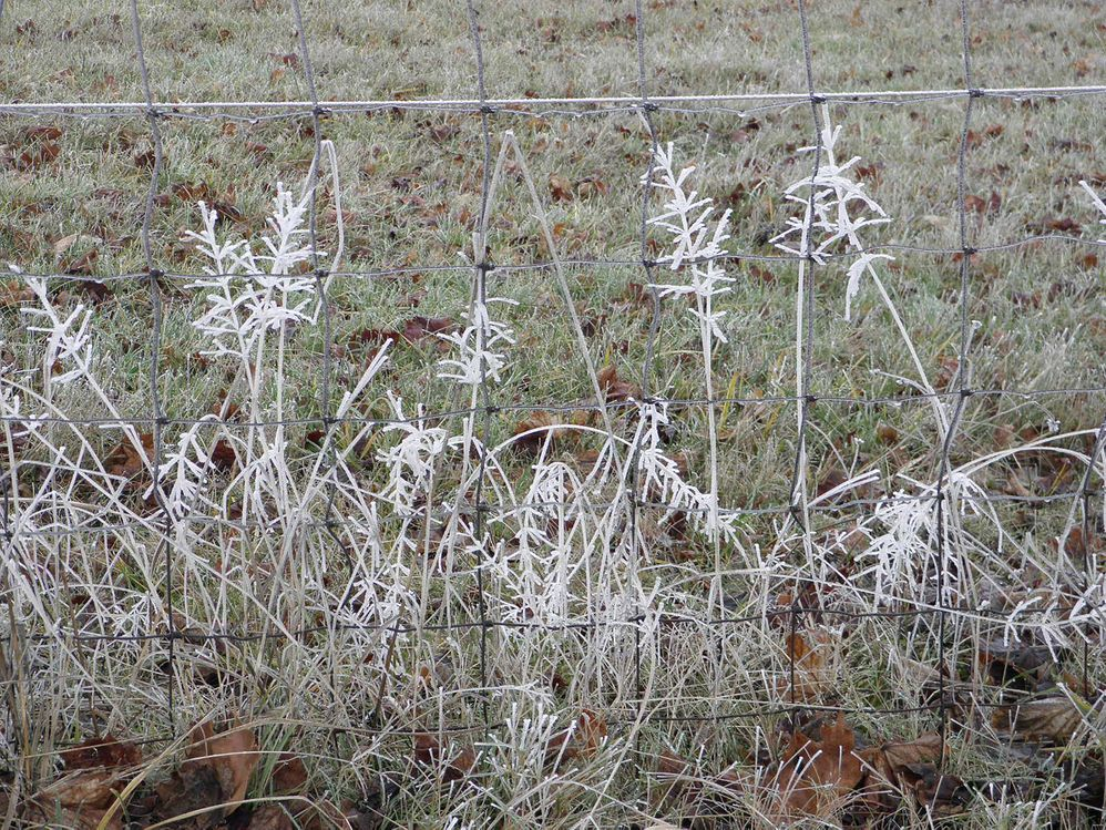 frosted grasses fence series 2.jpg