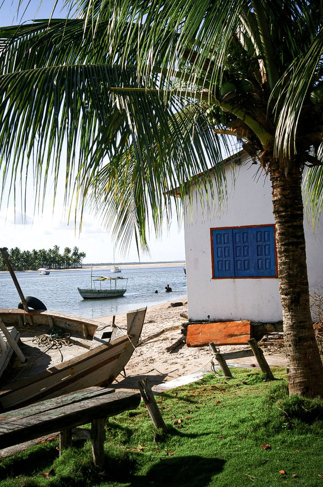 Living a Simple Life by the Sea in a Tropical Island.jpg