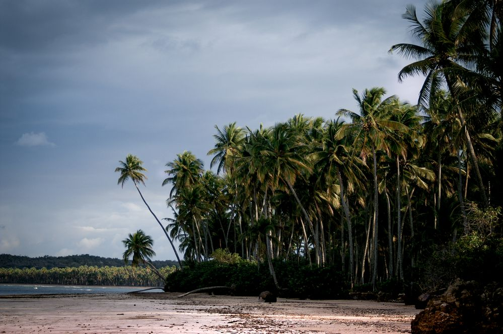 Palm Trees Forest and Pristine Beach.jpg