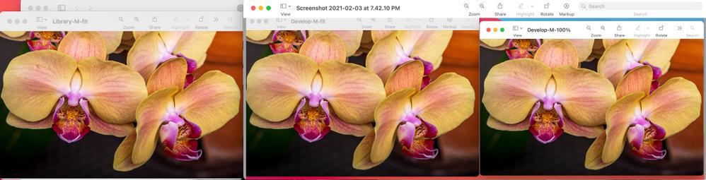 Screenshot 2021-02-03 at 7.55.55 PM.png
