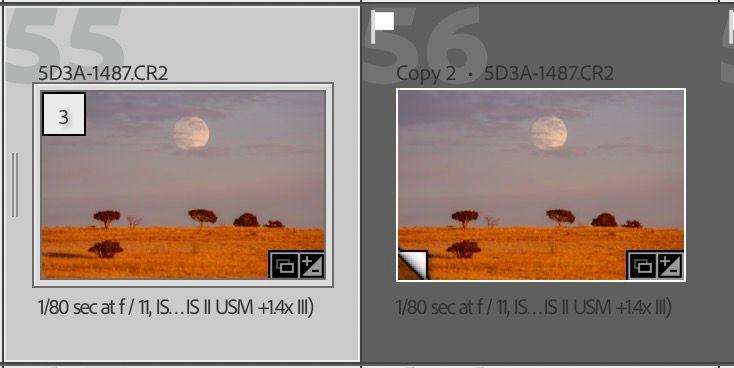 Screen Shot 2021-02-04 at 12.26.17 PM.jpg