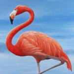 Susan Flamingo