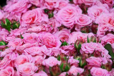 ilustrasi-bunga-mawar-foto-pixabay-76.jpg