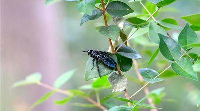 Wasp Clip.jpg