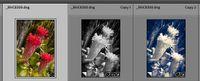 2021-05-22 14_36_37-Roberts Catalog-v10 - Adobe Photoshop Lightroom Classic - Library.jpg