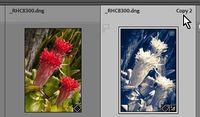 2021-05-22 14_37_00-Roberts Catalog-v10 - Adobe Photoshop Lightroom Classic - Library.jpg