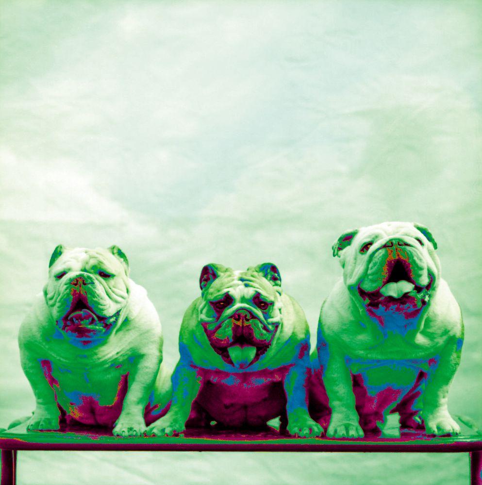 3 honden.jpg