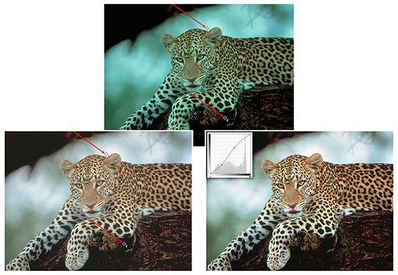 Leopard Composite small.jpg