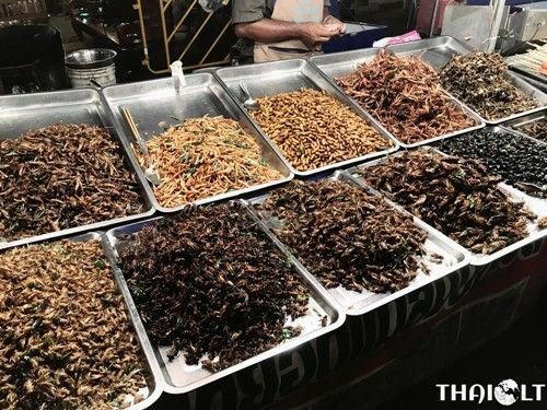 eating-insects_01.jpg