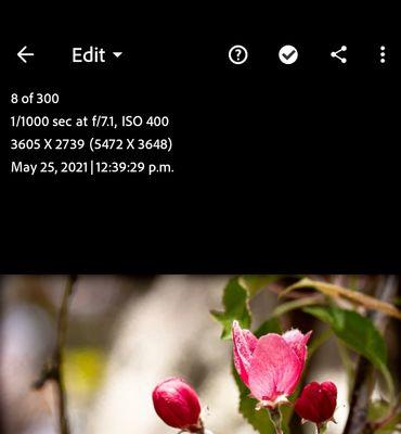 Screenshot_20210616-011457_Lightroom.jpg