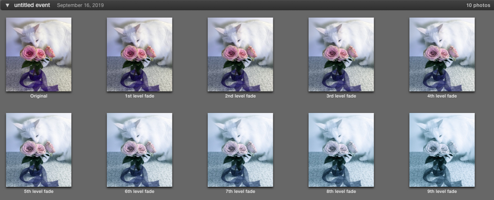 Progression in iPhoto thumbnails