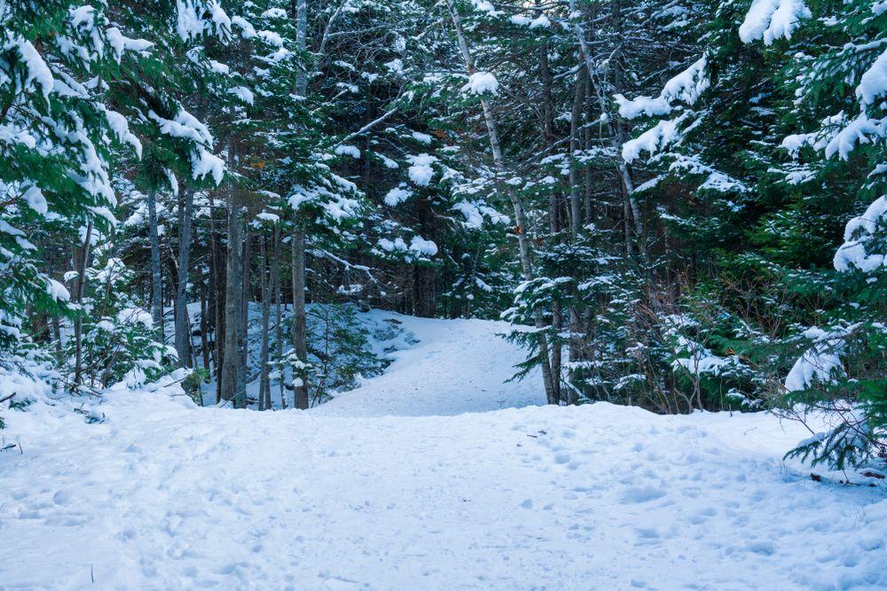Hemlock Ravine Park sPhoto 13 {2019}=KRM02.jpg