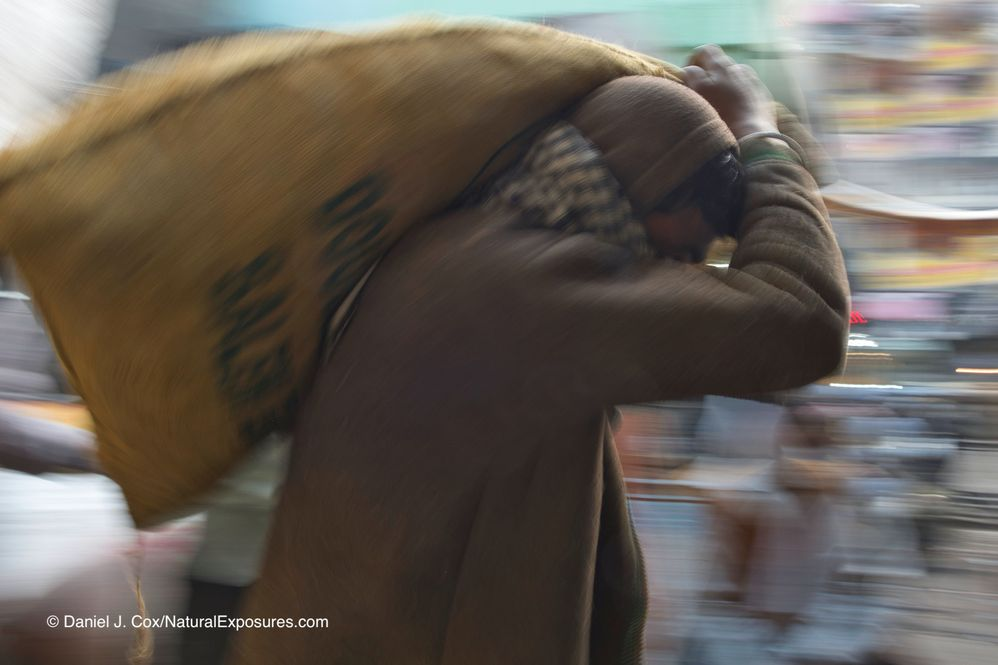 Man carrying sack of wheat in the old market section of Delhi, India.