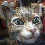 charliecat61