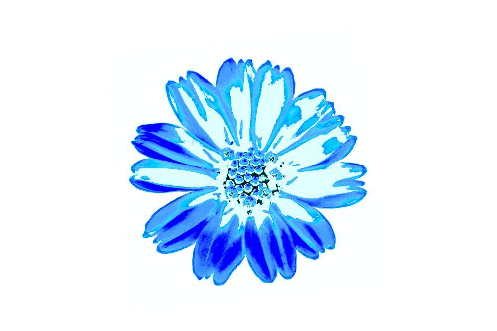 IMG_6637 Creeping oxeye blue flower.jpg