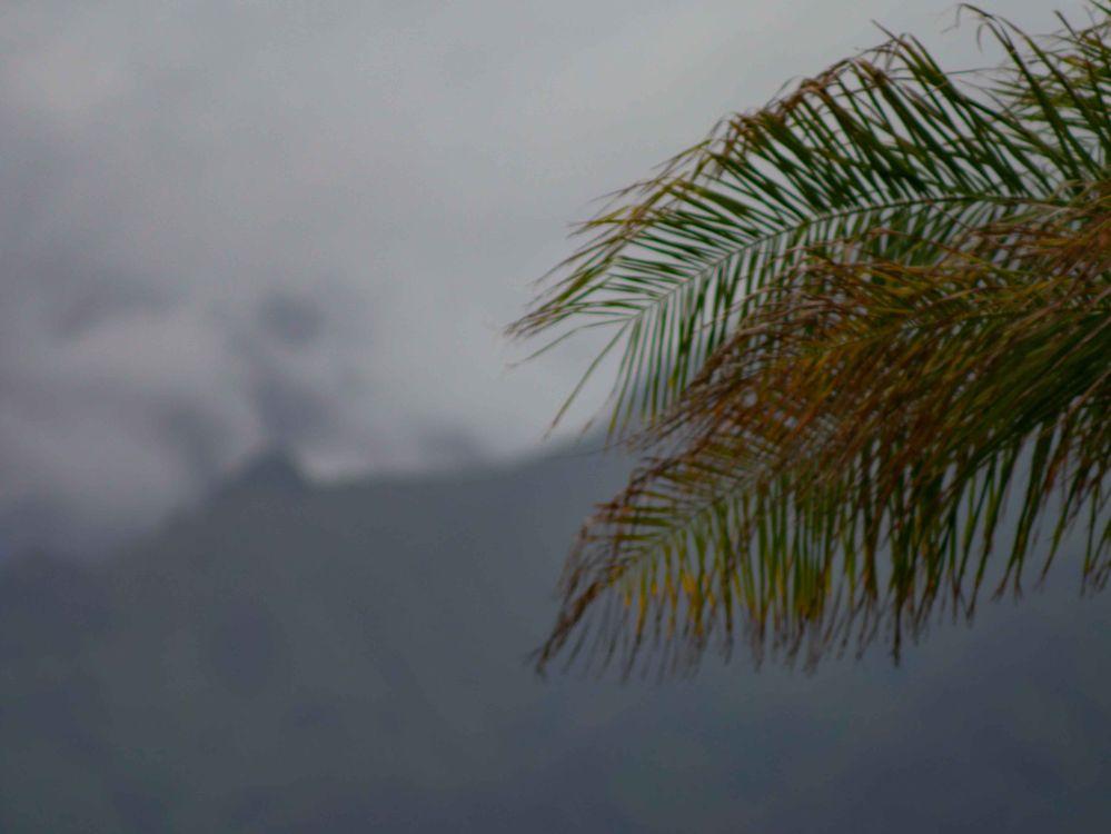 Hawaii 2020-1-02.jpg